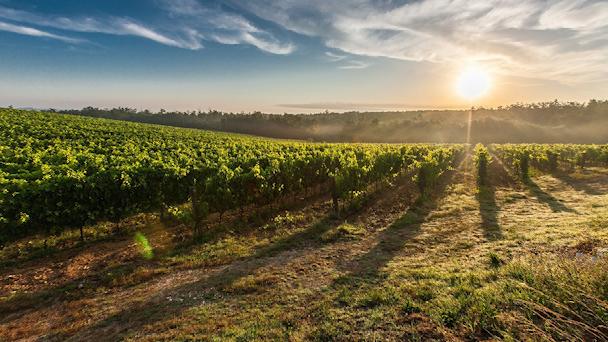 בעלות על קרקע חקלאית: אמת או חלום?